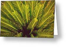 Spiked Leaves Greeting Card by Sumit Mehndiratta