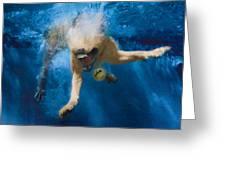 Splashdown 2 Greeting Card by Jill Reger