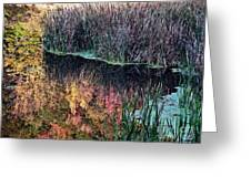 Splendor In The Grass Greeting Card by Christian Mattison