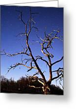 Spooky Tree Greeting Card by Larry Ricker