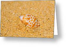 Spotted Babylon Shell Greeting Card by Cheryl Young