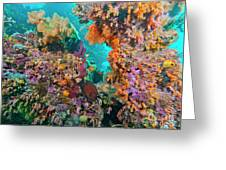 Spotted Goldring Surgeonfish And Coral Greeting Card by Beverly Factor