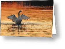 Spreading Her Wings In Gold Greeting Card by Randall Branham