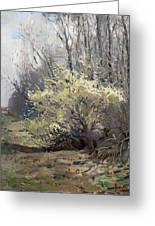 Spring Blossom Greeting Card by Ylli Haruni