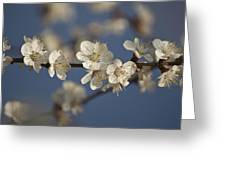 Spring Blossoms Greeting Card by Ayhan Altun