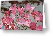 Spring Dogwood Tree Flowers Art Prints Pink Flowering Tree Greeting Card by Baslee Troutman