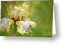 Spring Fling Greeting Card by Reflective Moment Photography And Digital Art Images