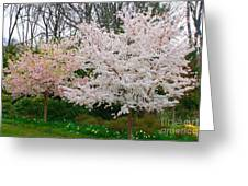 Spring Flowering Trees Greeting Card by Anahi DeCanio