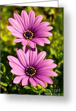 Spring Flowers Greeting Card by Carlos Caetano