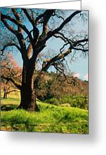 Spring Oak Greeting Card by Kathy Yates