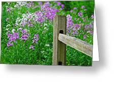 Spring Phlox 6074 Greeting Card by Michael Peychich