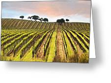 Spring Vineyard Greeting Card by Sharon Foster