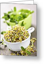 Sprouts In Cups Greeting Card by Elena Elisseeva