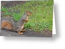 Squirrel Greeting Card by Linda Larson