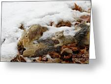 Squirrels In Winter Greeting Card by Bill Hyde