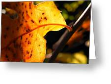 Stained Glass Of Autumn Greeting Card by Leah Moore
