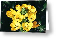Star Of Bethlehem Greeting Card by Science Source