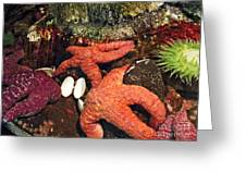 Starfish Medley Greeting Card by Methune Hively