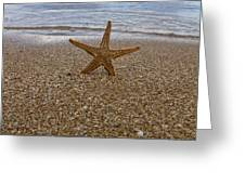 Starfish Greeting Card by Stylianos Kleanthous