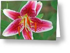 Stargazer Lilly Greeting Card by Michele Carter