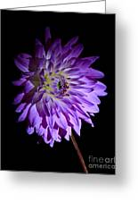 Starlight Star Bright Greeting Card by Inspired Nature Photography By Shelley Myke