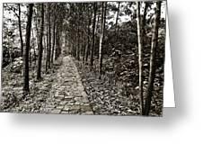 Stone Path Greeting Card by Skip Nall