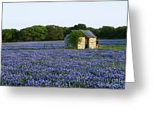 Stone Shed In Field Of Bluebonnets Greeting Card by Jeremy Woodhouse