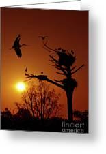 Storks Greeting Card by Carlos Caetano