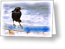 Stowaway On The Ferry Greeting Card by Judi Bagwell