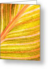 Striped Leaf Greeting Card by Bonnie Bruno