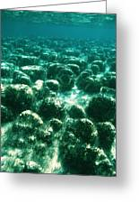 Stromatolites Greeting Card by Peter Scoones