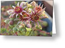 Succulent Cactus Greeting Card by Laurie Kidd