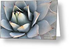 Succulent Greeting Card by Tracy L Teeter