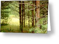 Summer Forest. Pine Trees Greeting Card by Jenny Rainbow