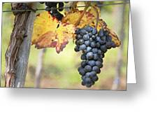 Summer Grapes Greeting Card by Sharon Foster