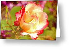 Summer Rose With Texture Greeting Card by Cathie Tyler