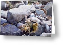 Summer Streambed Greeting Card by Sharon Freeman