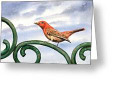 Summer Tanager Greeting Card by Sam Sidders