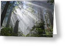 Sun Beams In Redwood Forest Greeting Card by Inga Spence and Photo Researchers