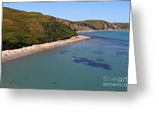 Sunbathing Elephant Seals Along A Beach At Point Reyes California . 7d16058 Greeting Card by Wingsdomain Art and Photography