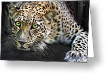 Sundari Greeting Card by Big Cat Rescue
