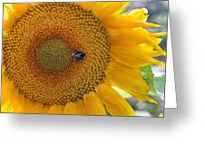 Sunflower And A Bumblebee Greeting Card by Aleksandr Volkov