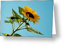Sunflower And Blue Sky Greeting Card by Marcio Faustino