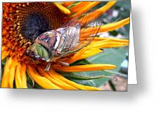 Sunflower And Insect  Greeting Card by Jon Baldwin  Art