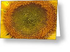 Sunflower Center Greeting Card by Darleen Stry