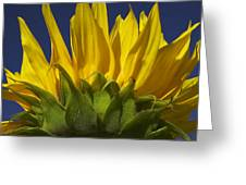 Sunflower Greeting Card by Garry Gay