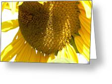Sunflower Love  Greeting Card by Pamela Patch