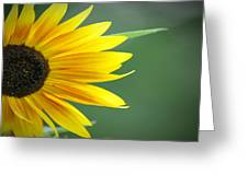 Sunflower Morning Greeting Card by Bill Cannon