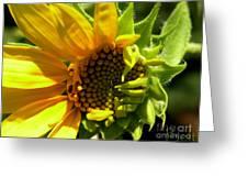 Sunflower No. 2 Greeting Card by Christine Belt