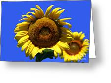 Sunflower Series 09 Greeting Card by Amanda Barcon
